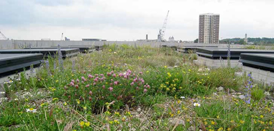 BIP_4_GreenRoof_Laban