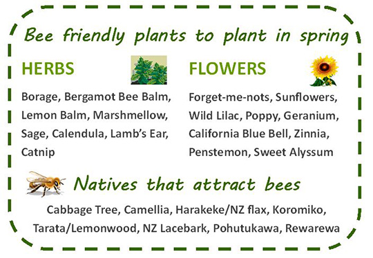 BIP_6_BeeFriendlyPlants